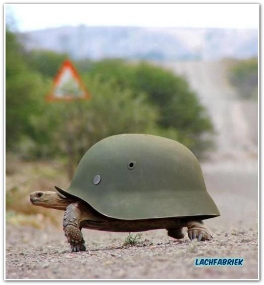 20100819_194956_leger-schildpad