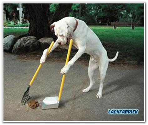 20100911_223533_hondenpoep-opruimen