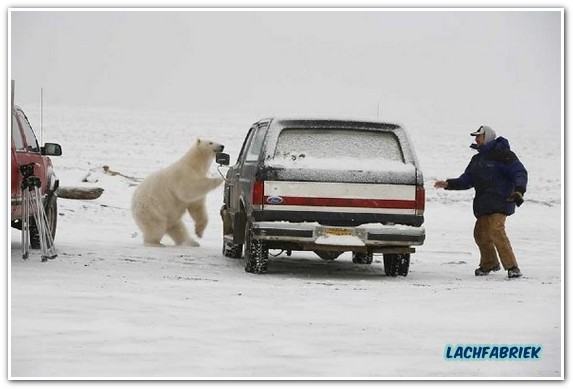 20101008_190542_ijsbeer-speeld-verstoppertje